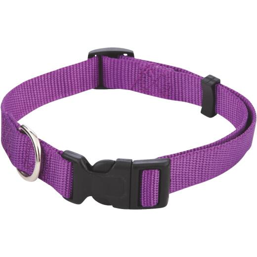 Westminster Pet Ruffin' it Fashion 14 In. to 20 In. Nylon Dog Collar